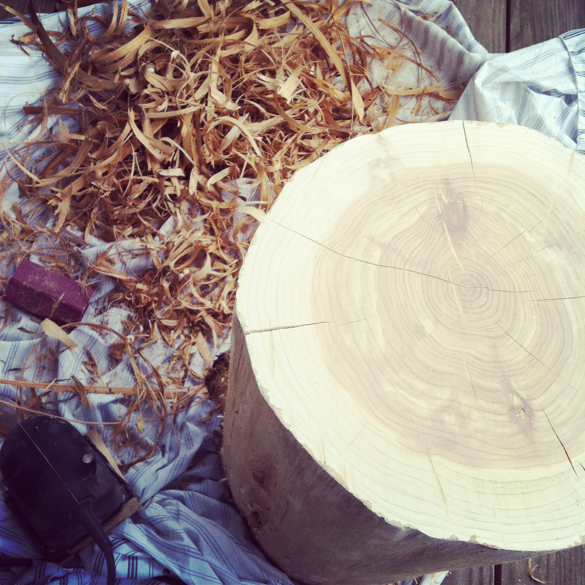cedar stump4